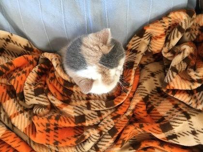 毛布に埋もれる
