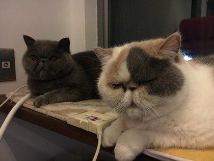 2匹が猫用カーペットの上に