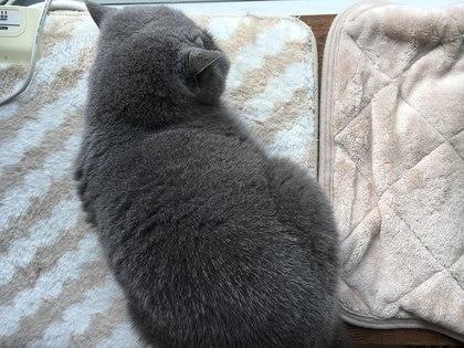 カーペットの上で寝ます