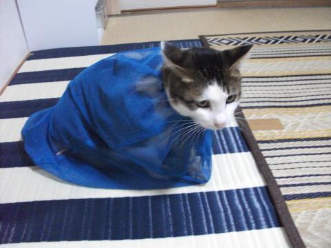 猫みのむし袋画像②