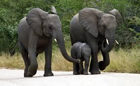 elephant_proverb.jpeg