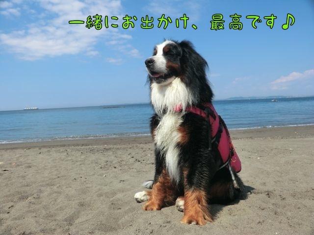 CIMG6608_20171009131230a79.jpg