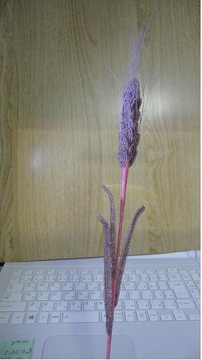 中級 麦の穂①