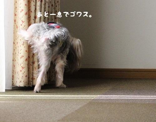 IMG_3119.jpg
