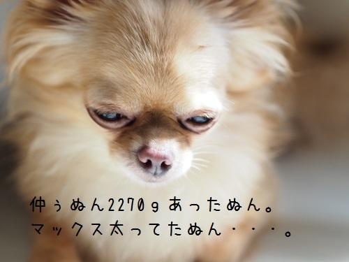 P7010031.jpg