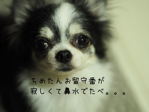 PC090010.jpg