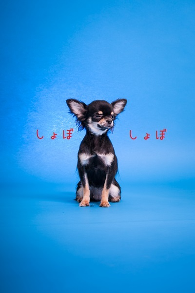 dogs-11.jpg