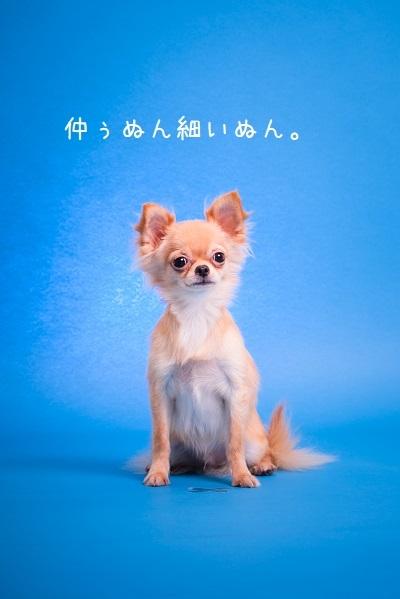 dogs-14_20171126093705749.jpg