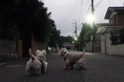 amegachikaduiteirunonikurai1.jpg