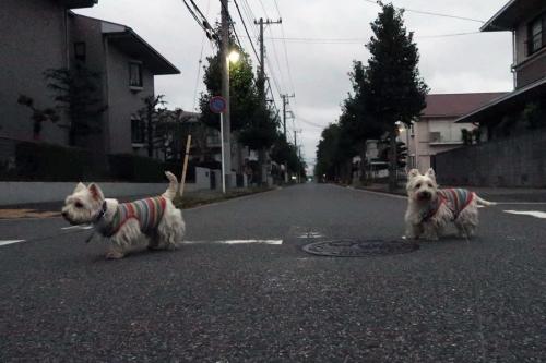 amegachikaduiteirunonikurai2.jpg