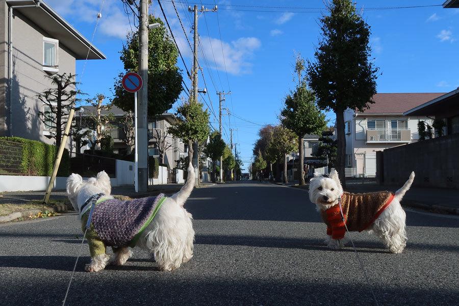 bokuhaphotoblognihaikenaina3.jpg