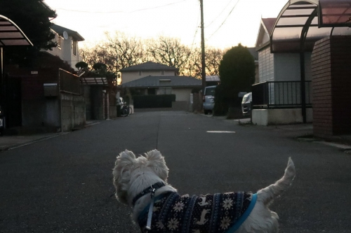 jyosinochinobashogakawattekita3.jpg