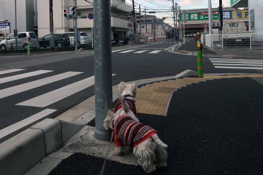 nawabarigaihanioigachigaurasi3.jpg