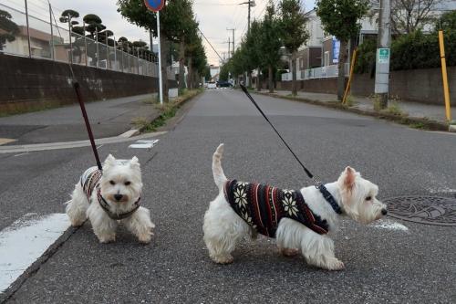 otenkitaikanchukeihausodane3.jpg
