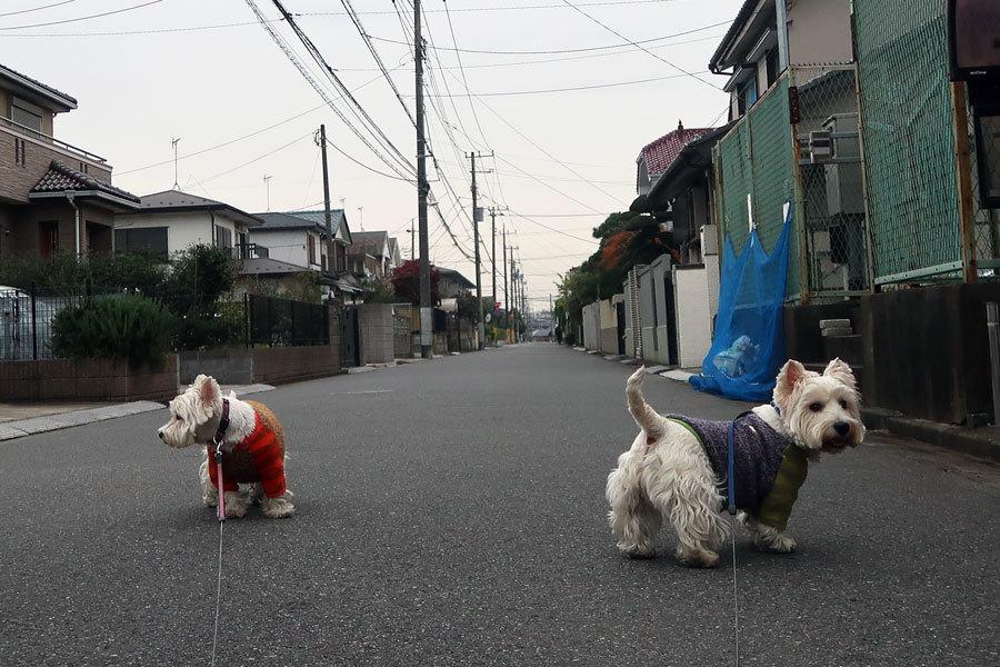 romenondogahikuikaraoyukana2.jpg