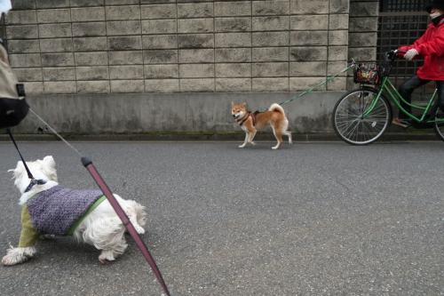 romenondogahikuikaraoyukana3.jpg