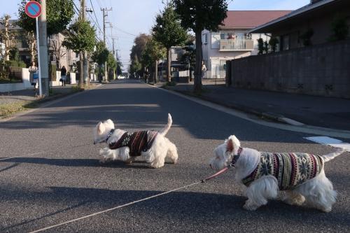 wagayanohouhakouyouosoizo3.jpg