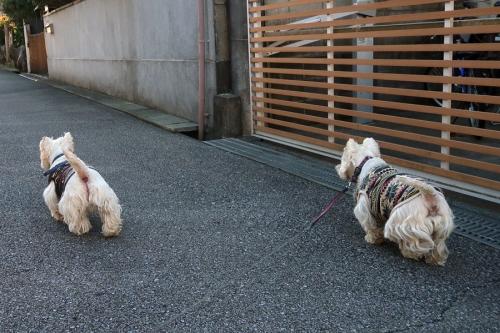 yochiyochimamakaraosowatta2.jpg