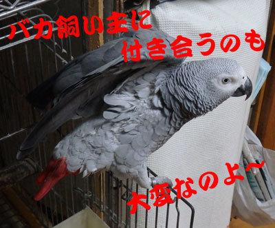 8_カンナ5