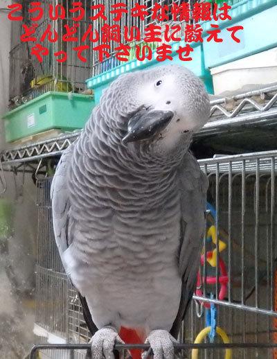 10_ステキ