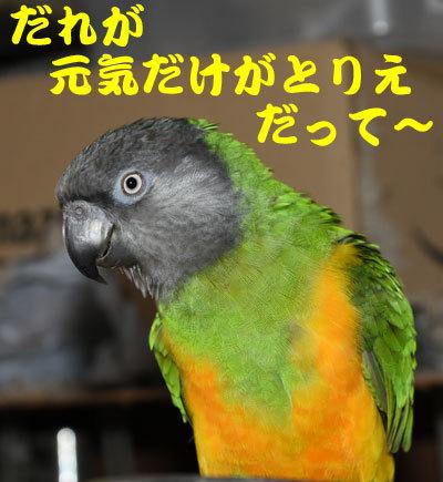 10_元気