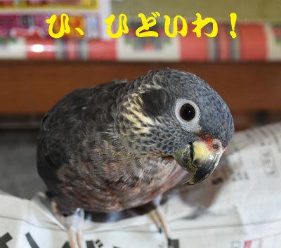 11_ひどいわ