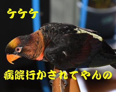 5_けけけ