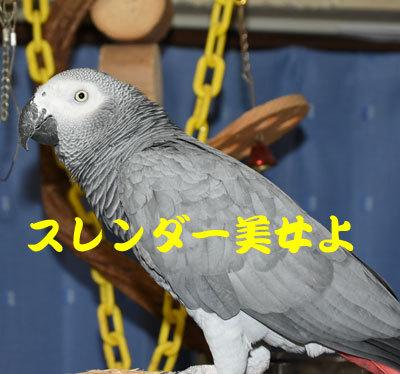 4_スレンダー