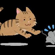 ネコ(ネズミを追いかける
