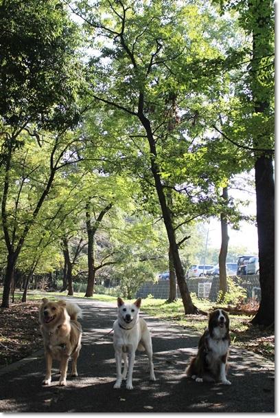 018公園