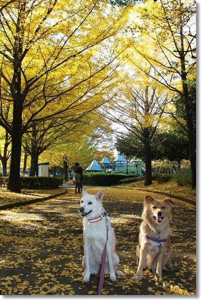 010平塚公園