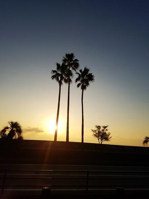 桜島朝陽1-4