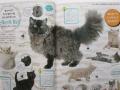 猫カタログ-1