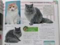猫カタログ2018セルカーク