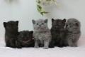 kittens-1_171129
