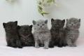 kittens-2_171129