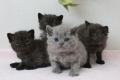 kittens-3_171129
