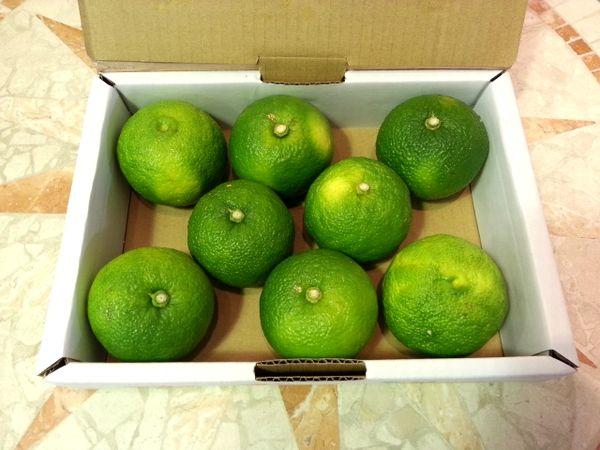 柚子胡椒17