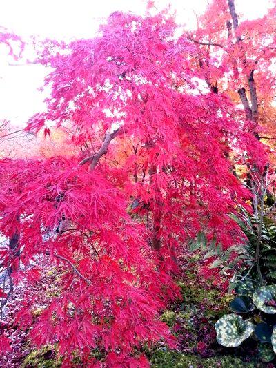 京都観光☆
