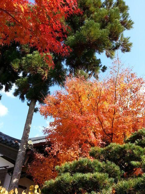 京都観光5-1
