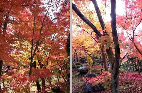 京都観光6