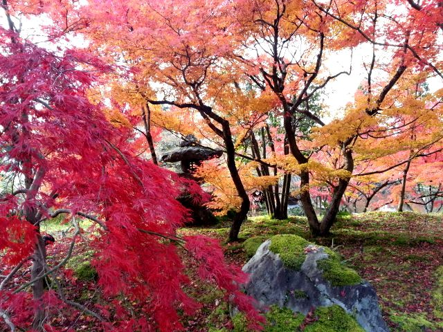 京都観光7