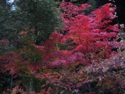 萬翠荘 紅葉