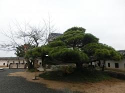 松山城の松