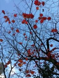 芝大神宮の紅葉
