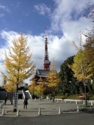銀杏と増上寺と東京タワー