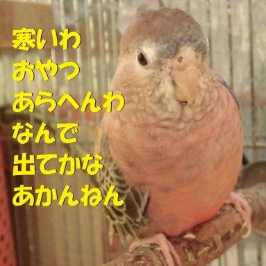 CIMG0118.jpg