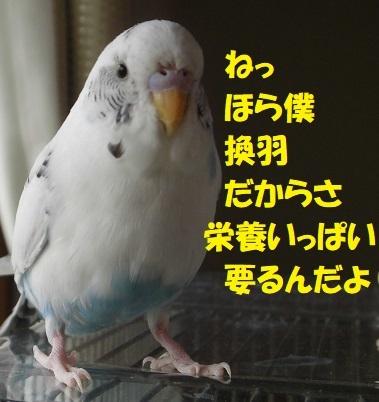 CIMG0144.jpg