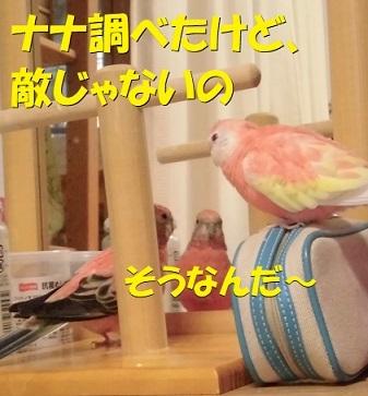 CIMG0301.jpg