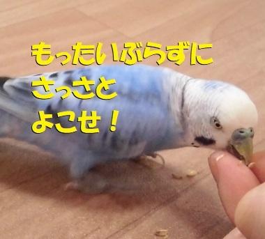 CIMG0363.jpg